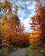 Herbst im Ost-Lappwald [2]