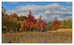 """Herbst im """"Park der Generationen"""""""