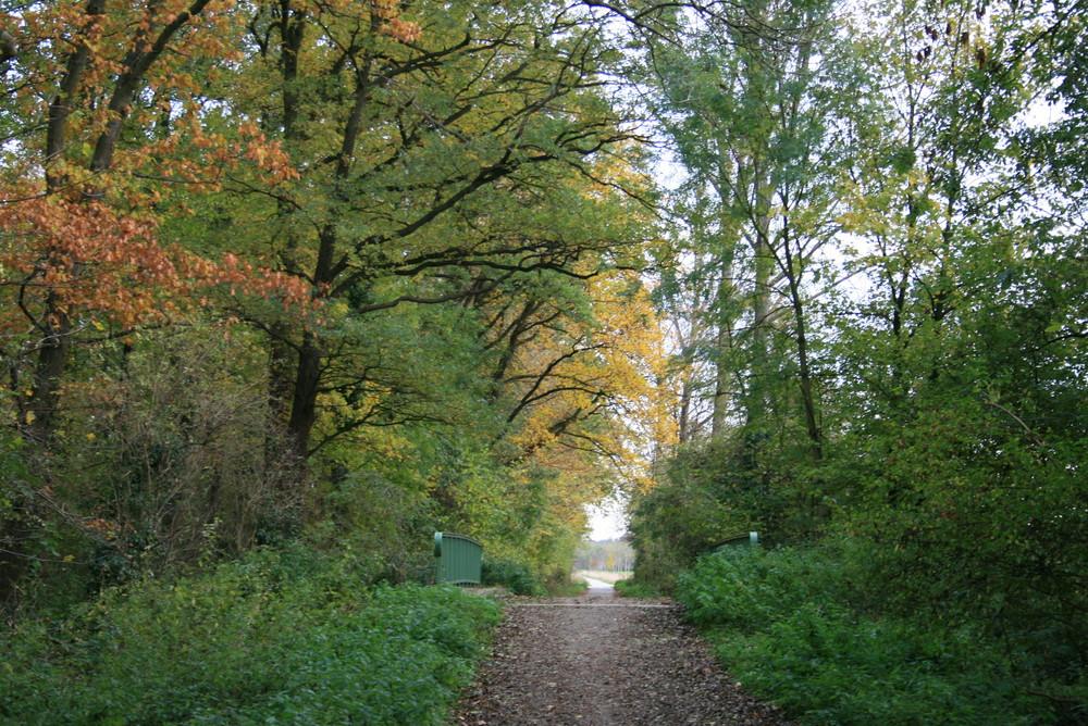 Herbst im Parrig bei Kerpen November 2006