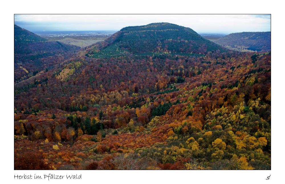 Herbst im Pfälzer Wald 2 Foto & Bild   jahreszeiten ...