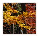 Herbst im Quadrat IV