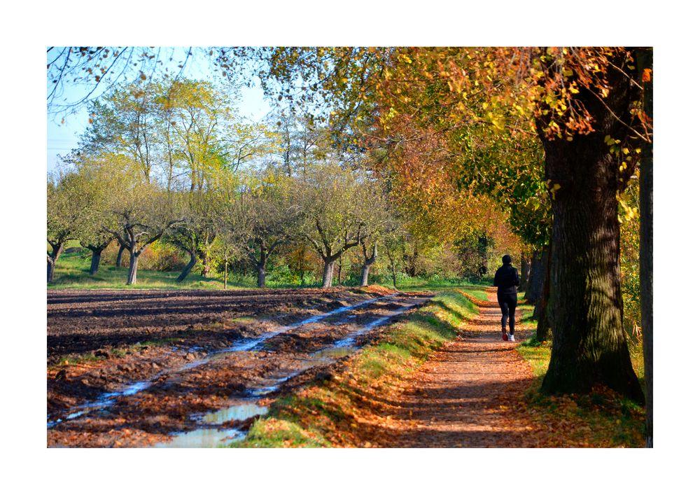 Herbst im Rosental