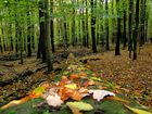 Herbst im Saarland