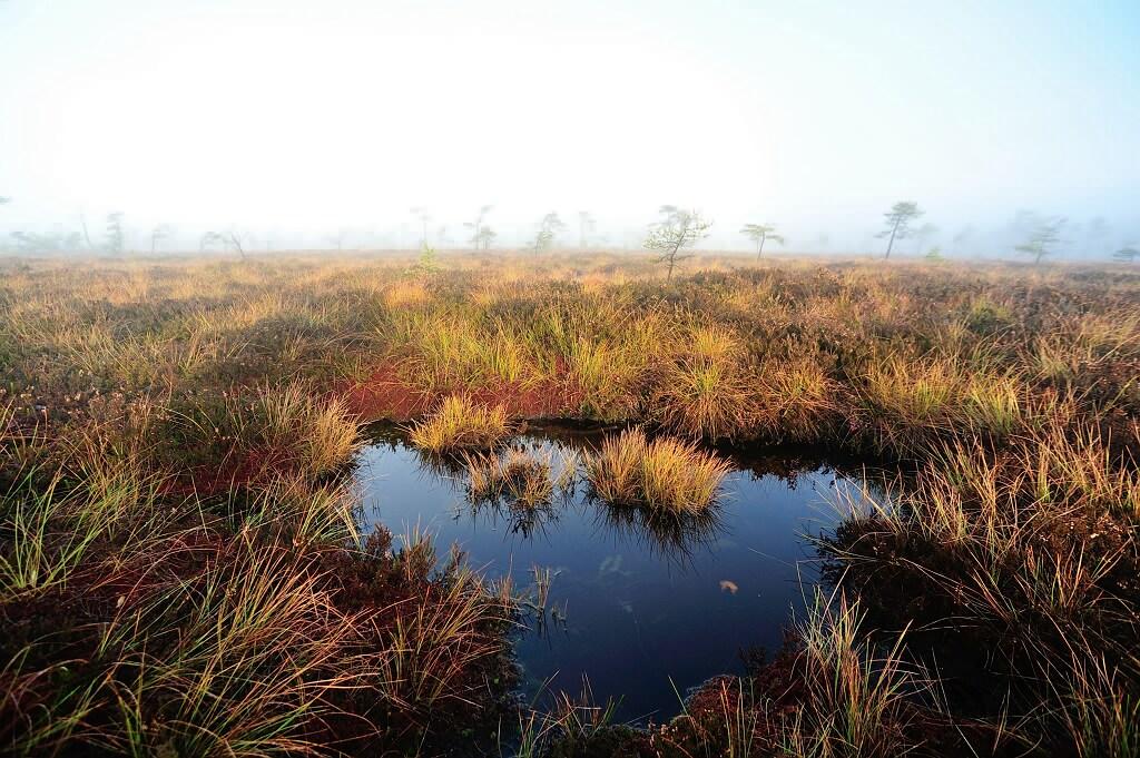 Herbst im Schwarzem Moor 3