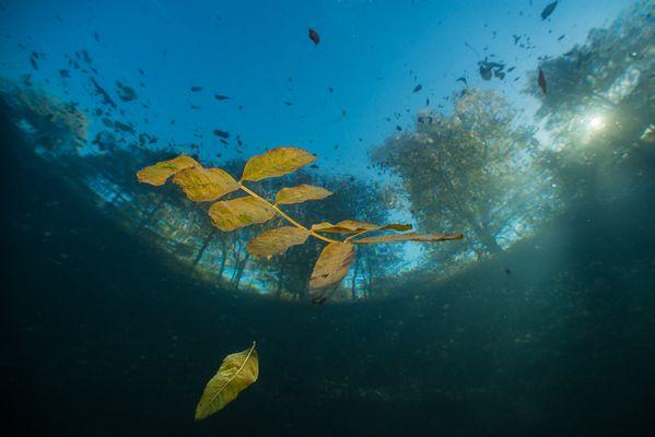 Herbst im See...