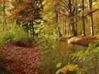 Herbst im Siebentischwald II