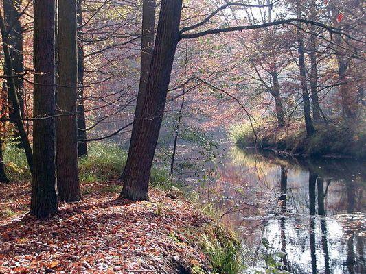 Herbst im Spreewald