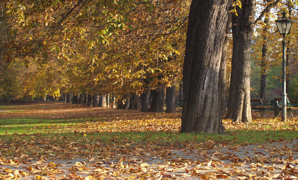 Herbst im Stadtpark - 2