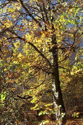 Herbst im Steigerwald