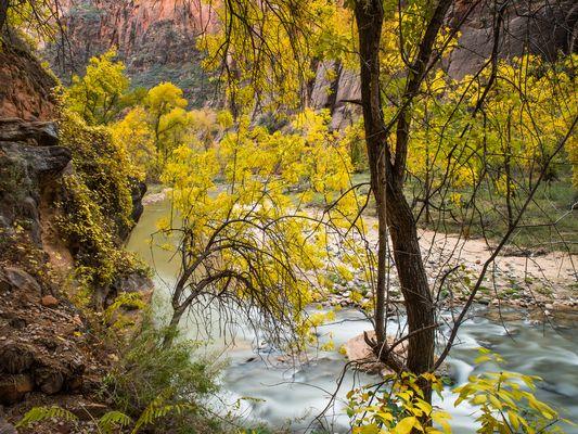 Herbst im Tal des Virgin Rivers