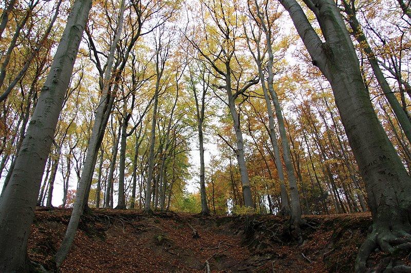 Herbst im Teuteburger Wald