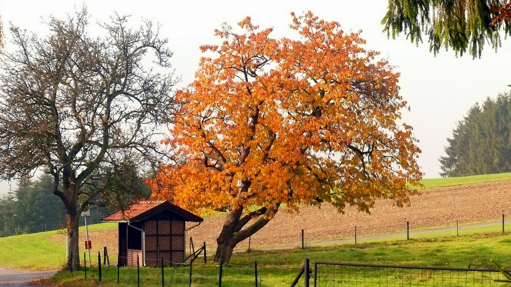 Herbst im Teutoburgerwald