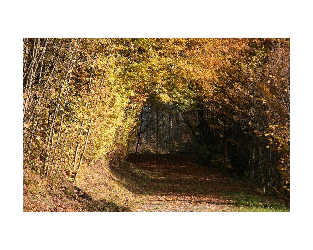 Herbst im Thurgau