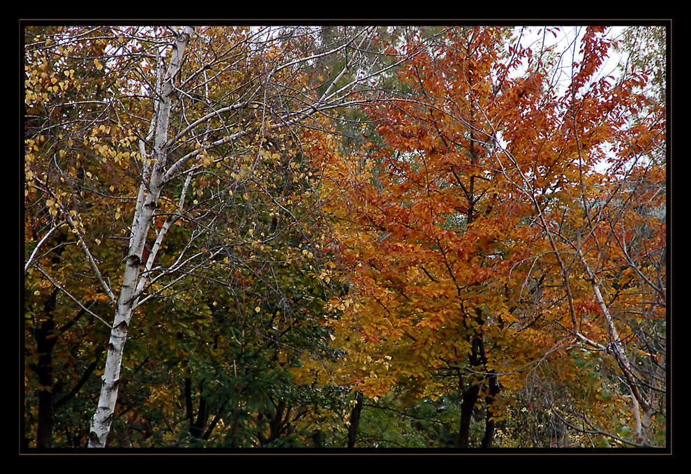 Herbst im Töllerpark