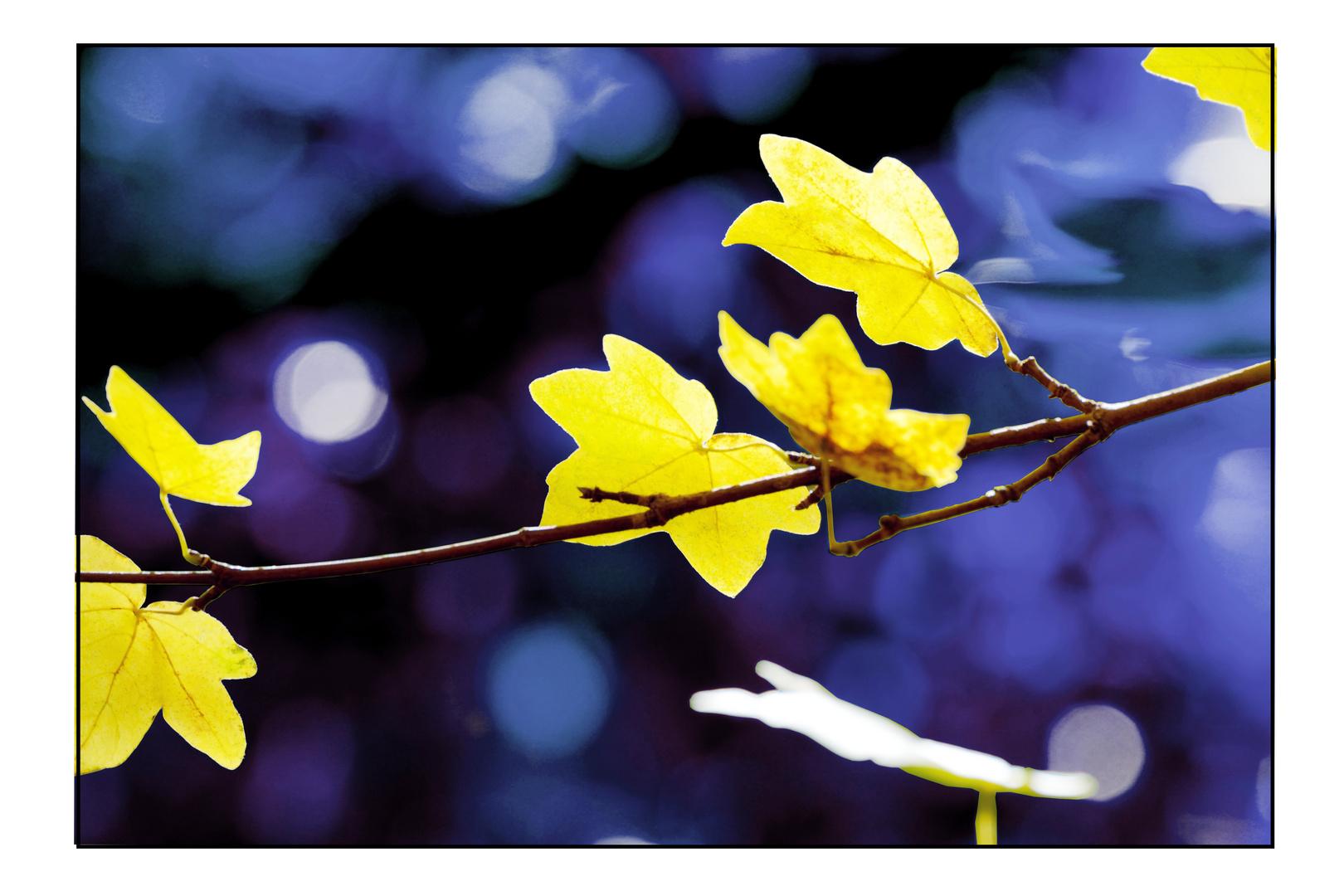 Herbst im Traumland