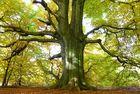 Herbst im Urwald an der Sababurg