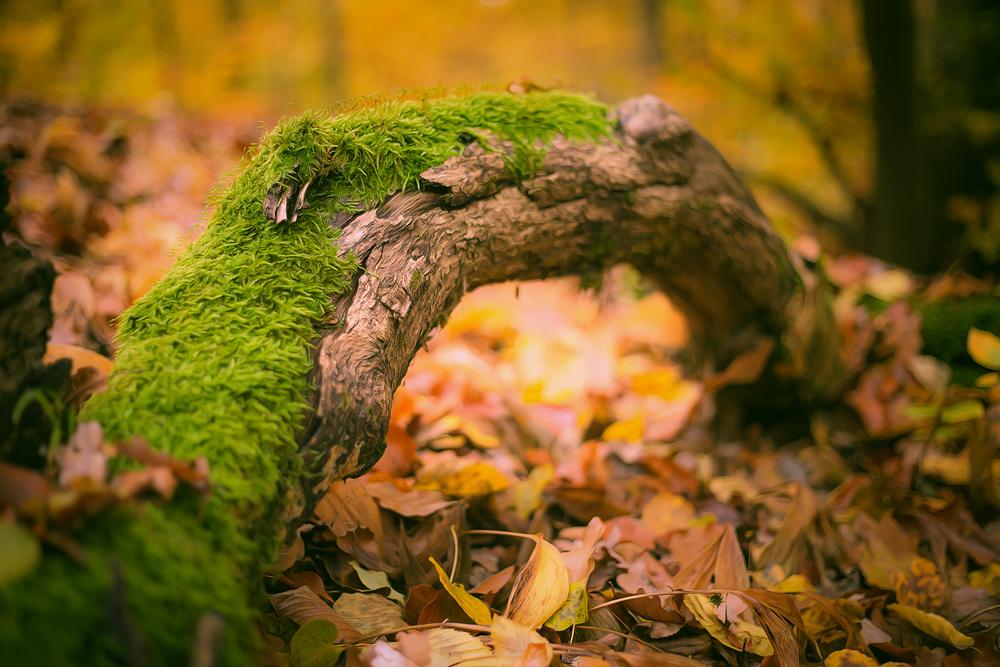 Herbst im Wald :)
