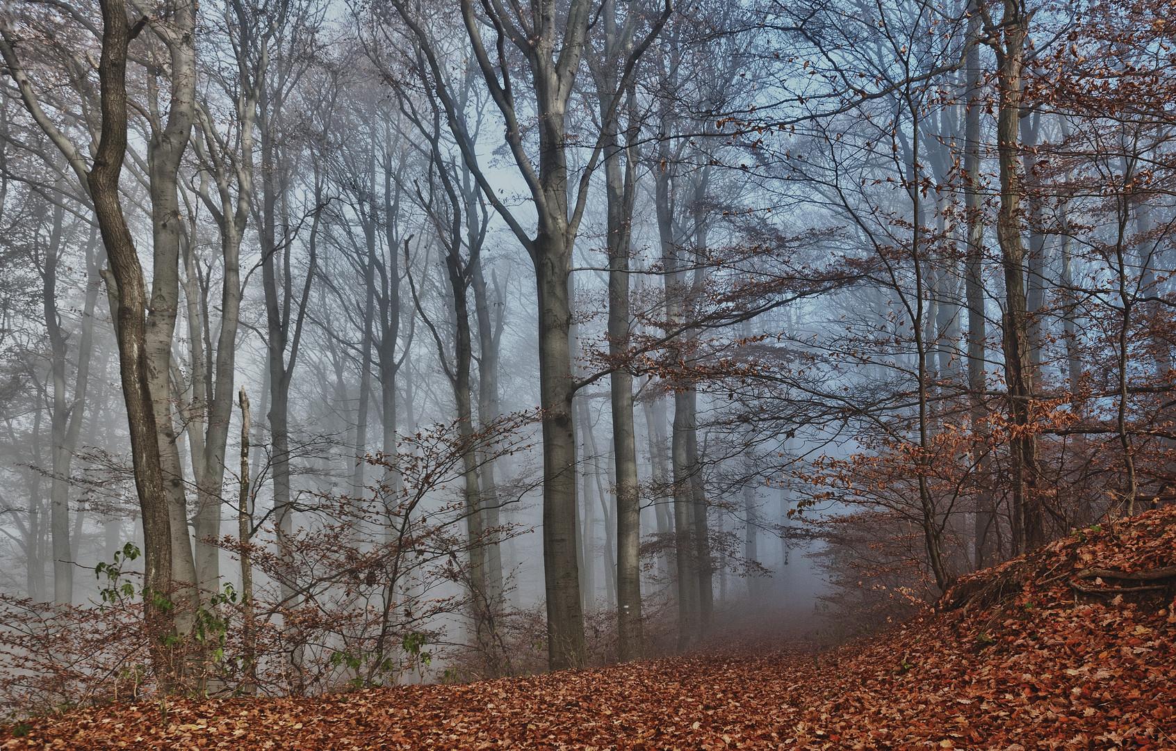 Herbst im Wald 2011_11_15_3