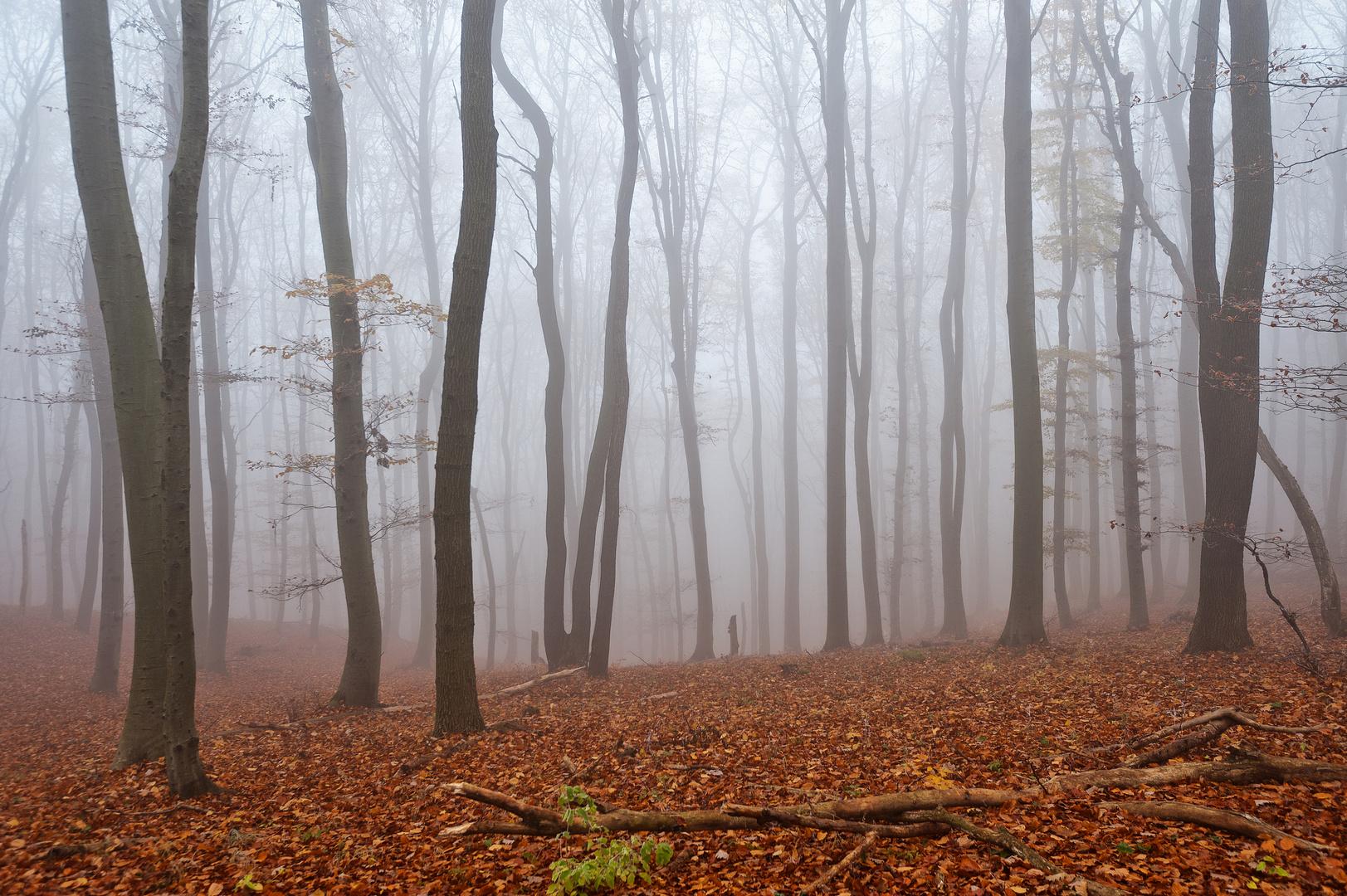 Herbst im Wald 2011_11_15_7