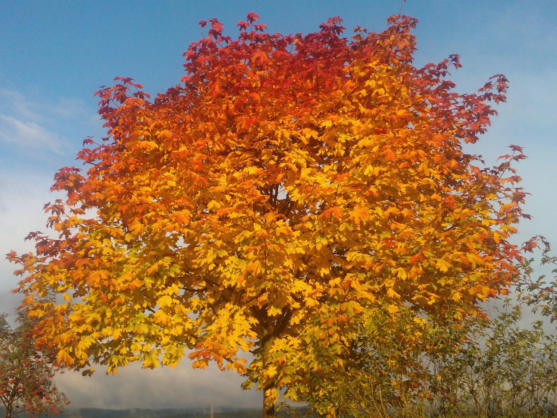 Herbst - im Wandel der Farben