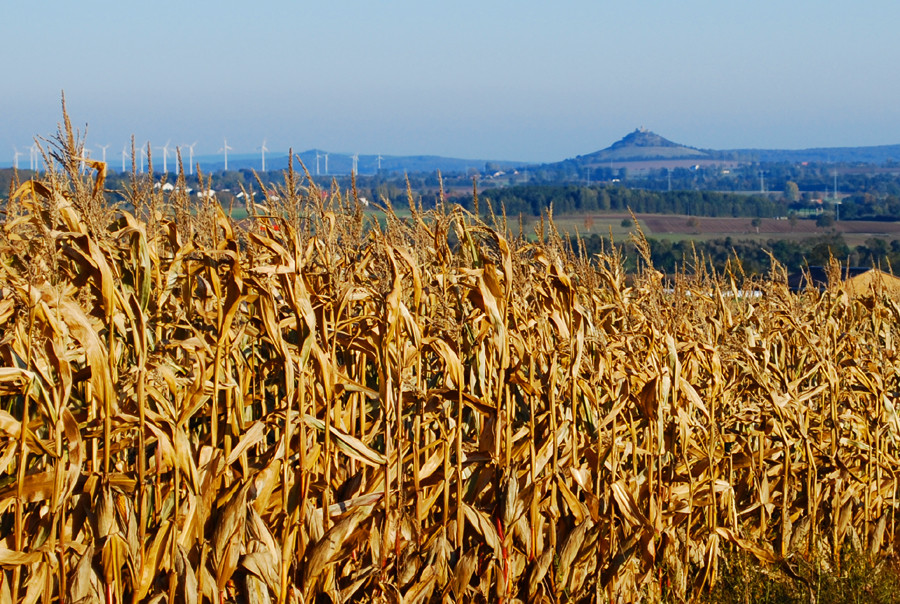 Herbst im Warburger Land