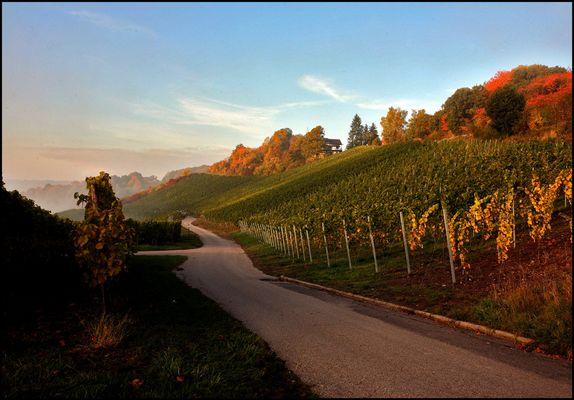 Herbst-im-Weinberg