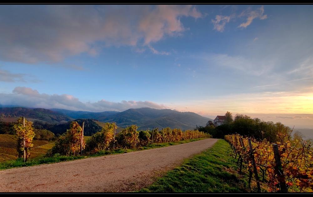 Herbst im Weinland (1)
