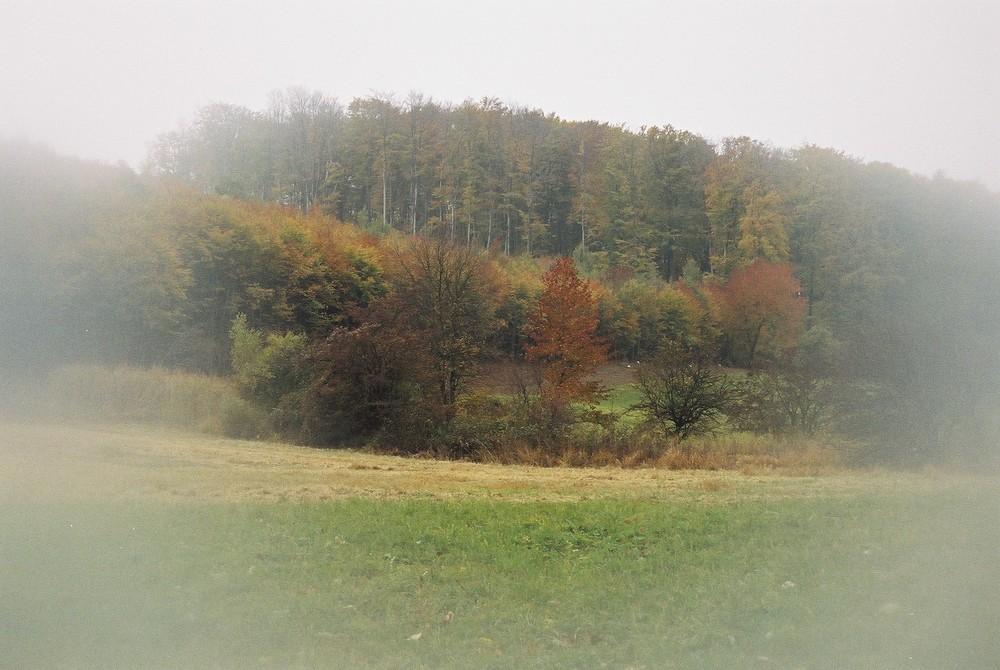 Herbst im Wienerwald 1