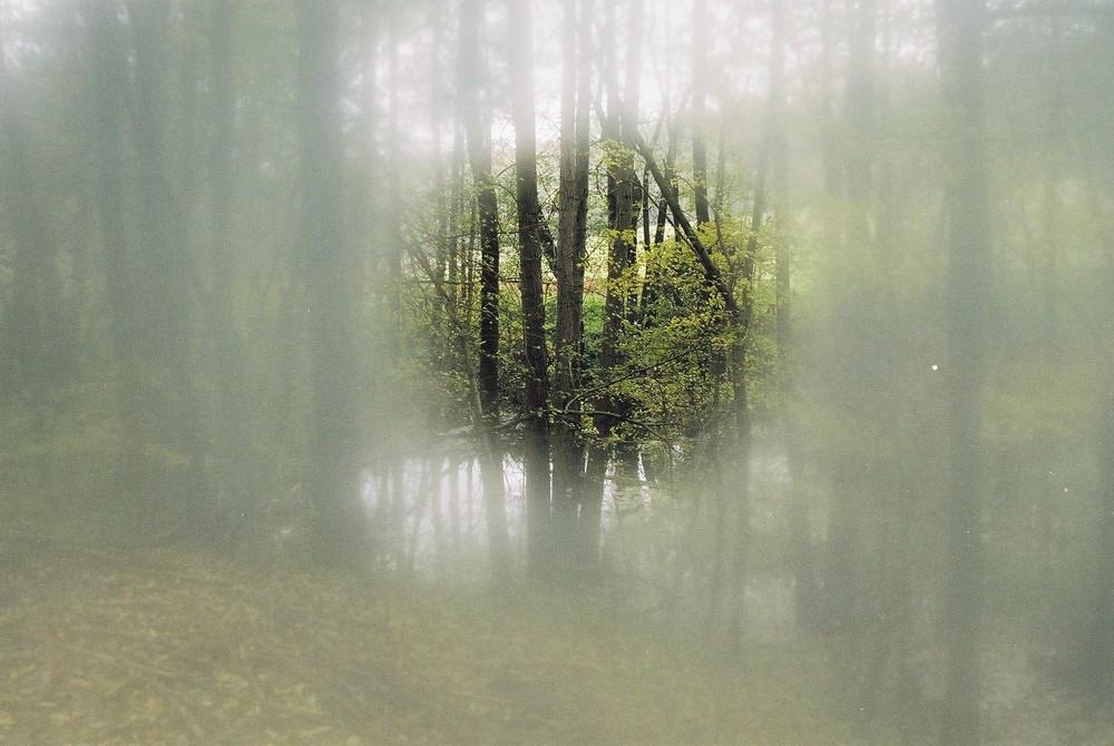 Herbst im Wienerwald 2