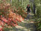 Herbst im Wienerwald