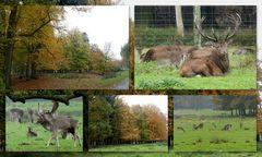 Herbst im Wildpark