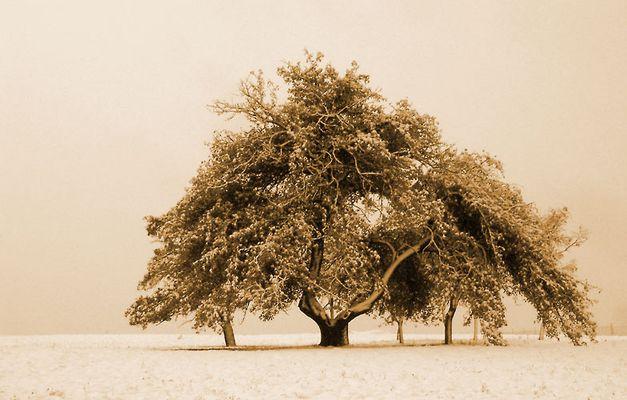 Herbst im Winter, oder Winter im Herbst