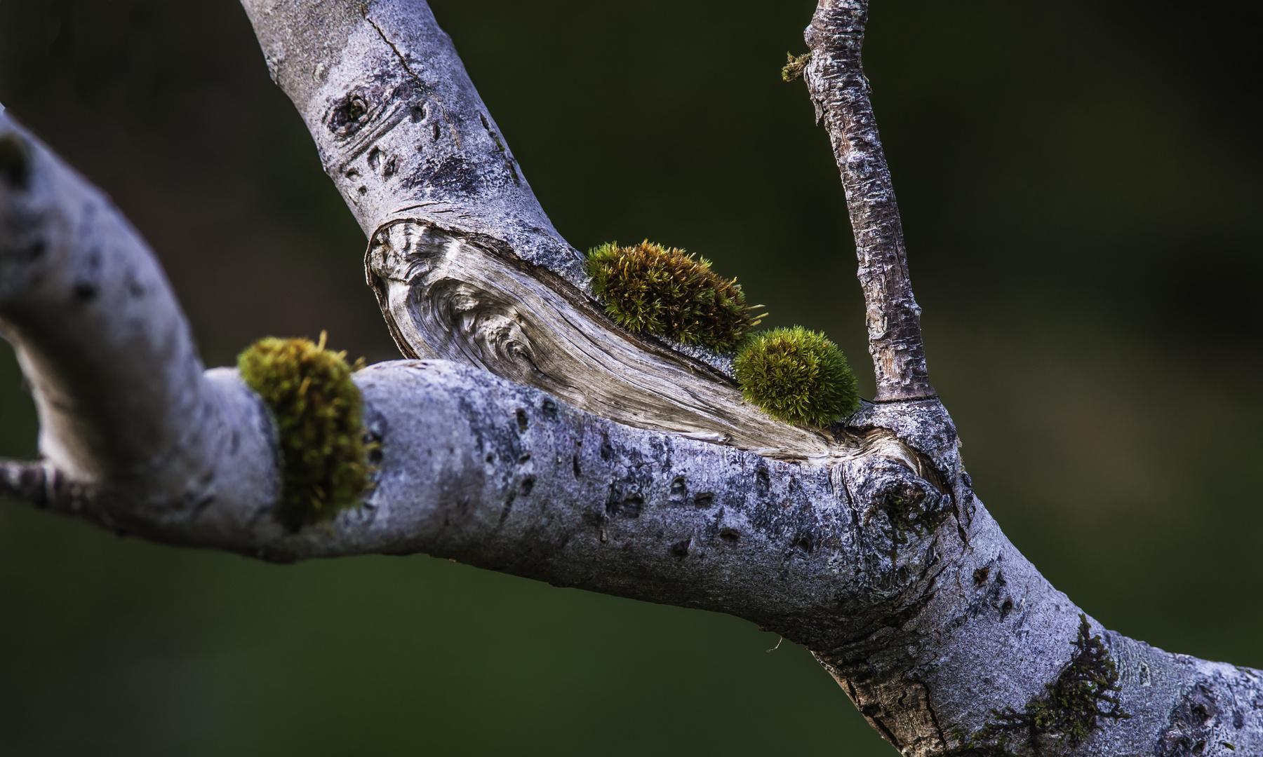 Herbst Impression