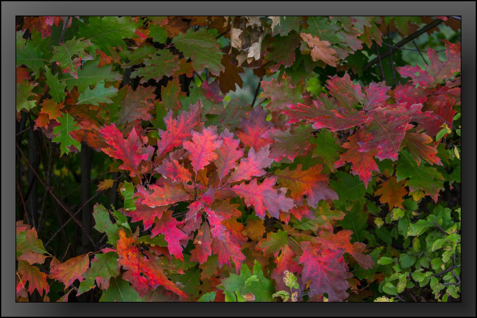 Herbst-Impressionen 01