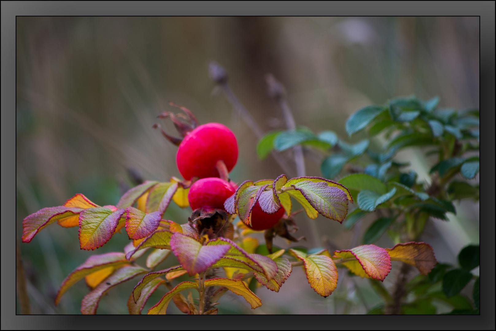 Herbst-Impressionen 03