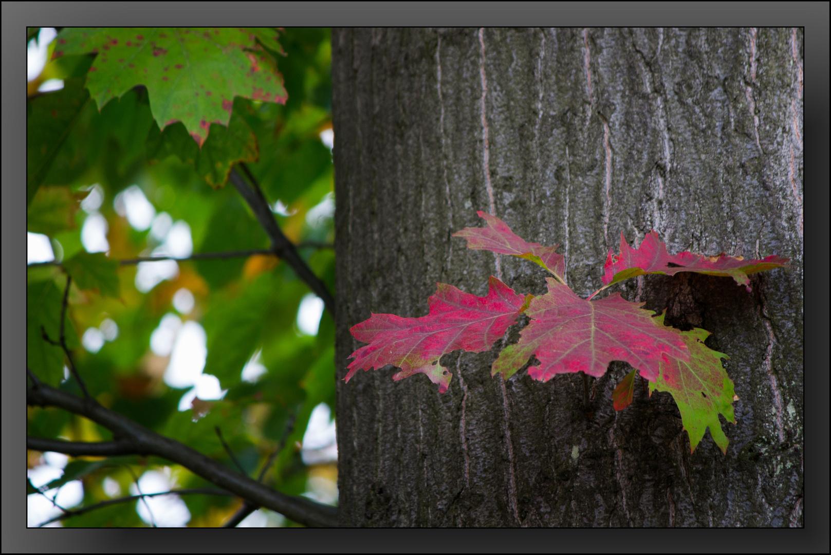Herbst-Impressionen 05