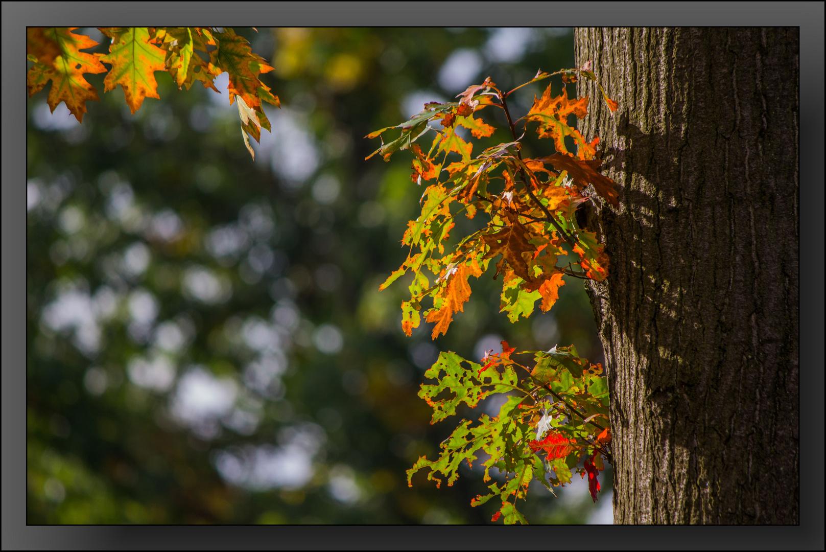 Herbst-Impressionen 06