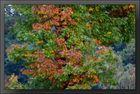 Herbst-Impressionen 07