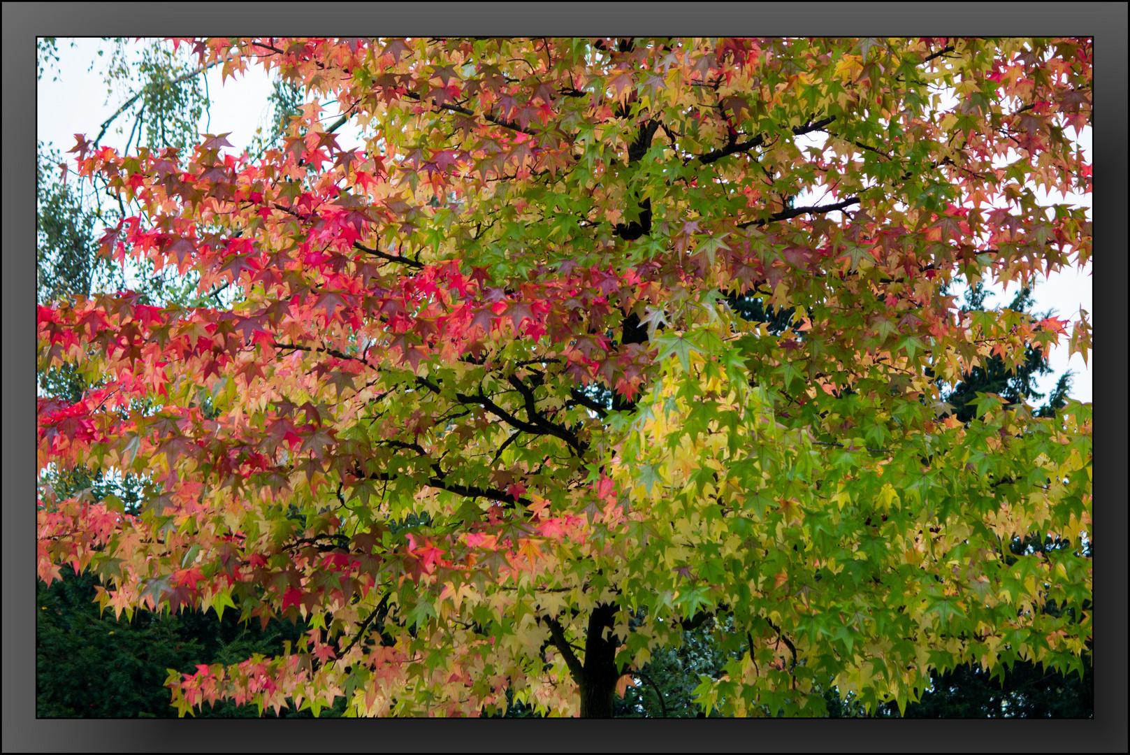 Herbst--Impressionen 08