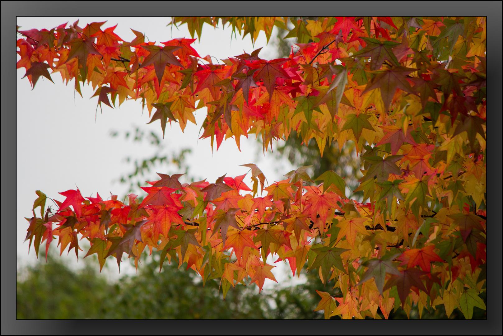 Herbst-Impressionen 10