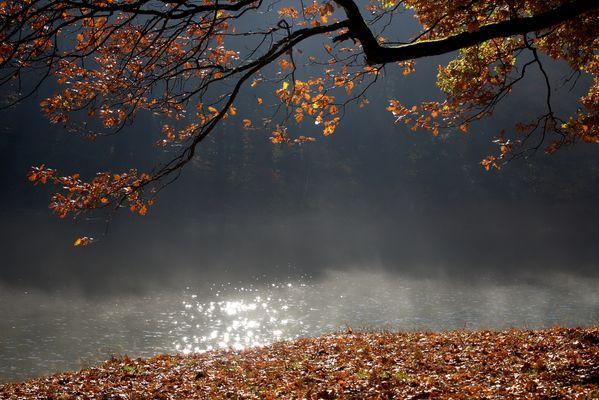 Herbst Impressionen 3