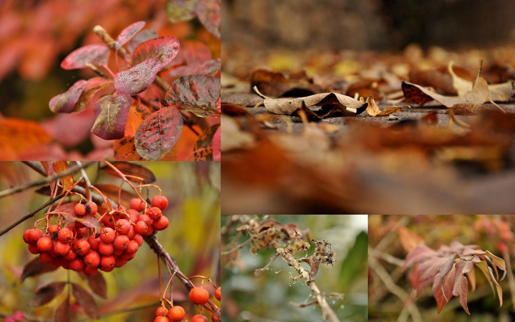 Herbst impressionen.