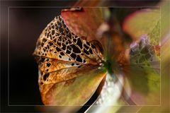 Herbst-Impressionen ....