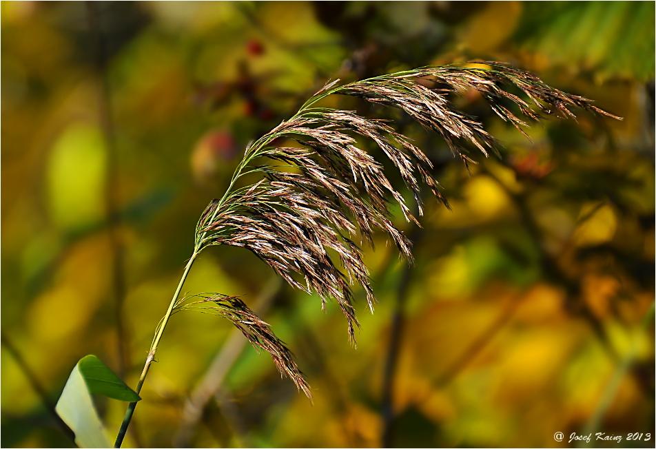 Herbst Impressionen,