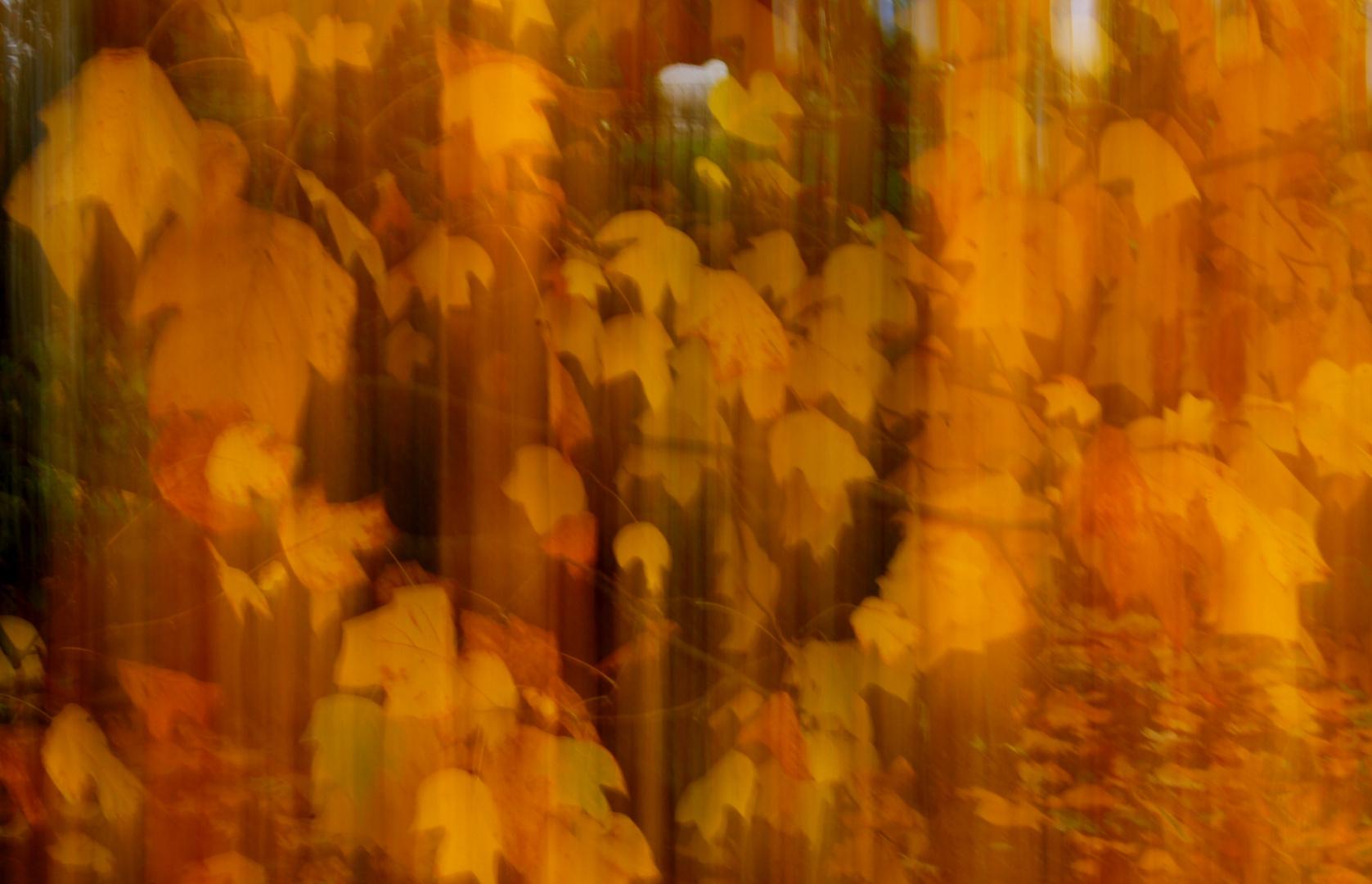 Herbst-Impressionen I