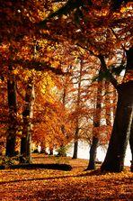 Herbst Impressionen in der Natur 13