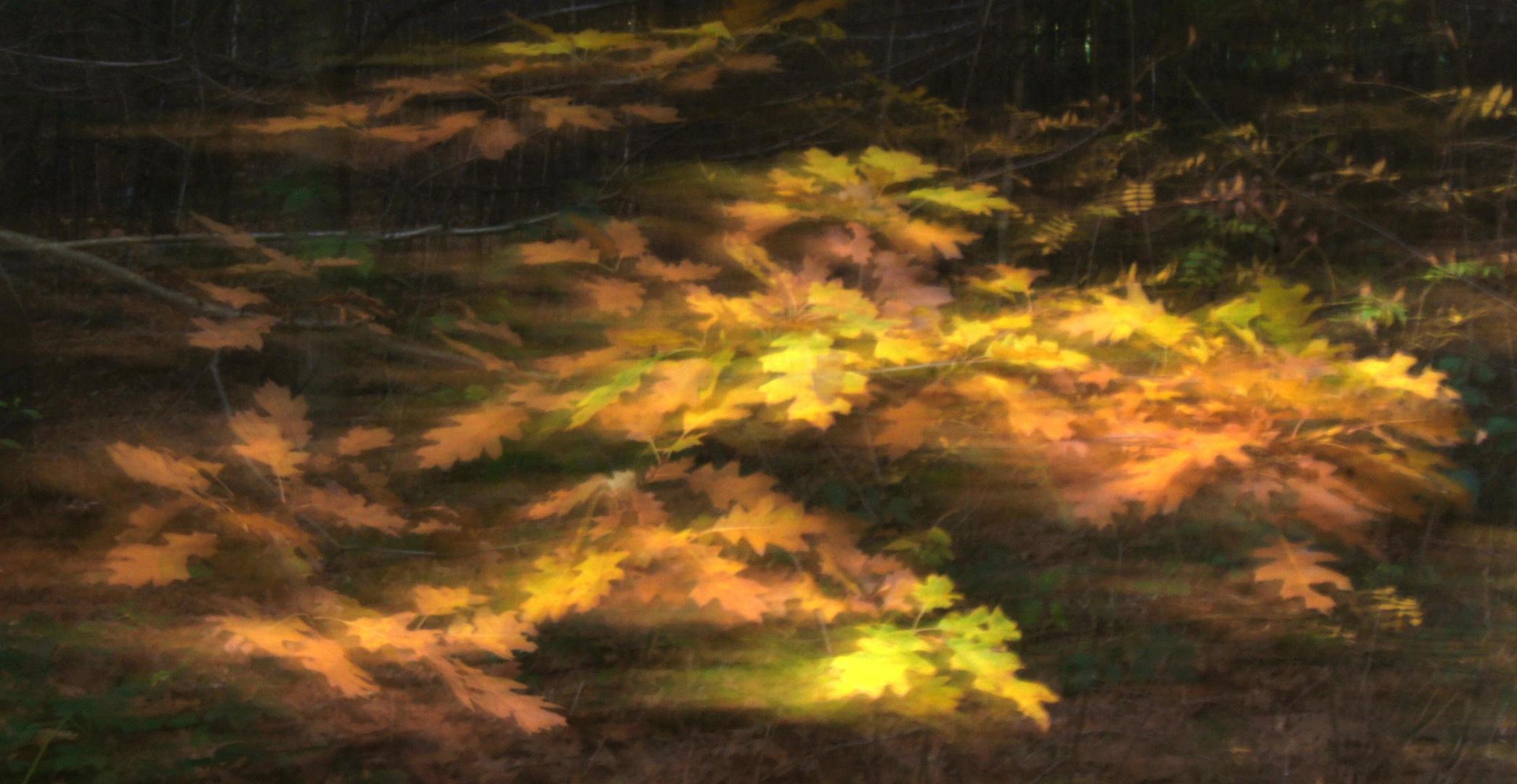 Herbst-Impressionen V