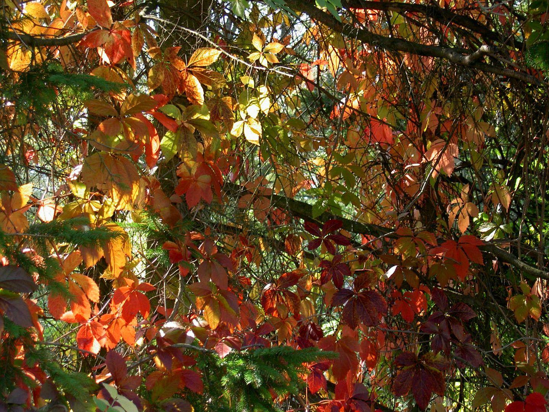 Herbst in allen seinen Farben