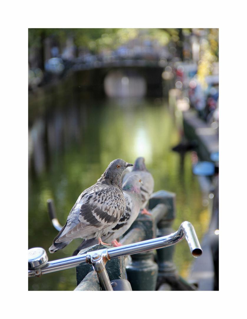Herbst in Amsterdam
