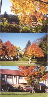 Herbst in Ashland/Oregon